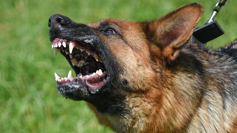Нюх на опасность: на что способны российские военные собаки