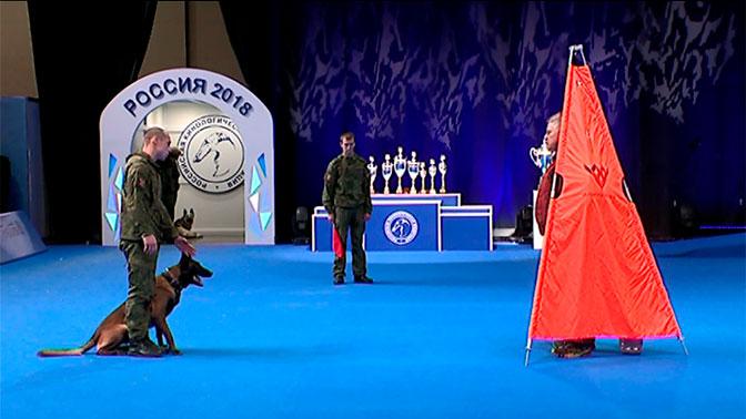 Чемпионы АрМИ-2018 выступили на выставке собак «Россия-2018»