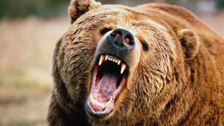 Медведь напал на супружескую пару в Красноярском крае