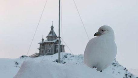 Патриарх Кирилл нашел образ идеального человечества в Антарктиде