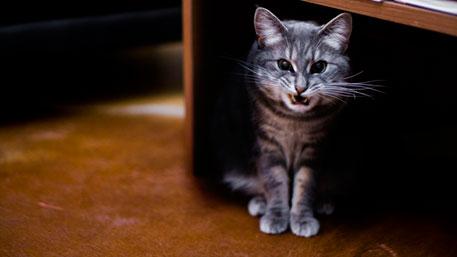 Заминированный кот разгуливает по Москве