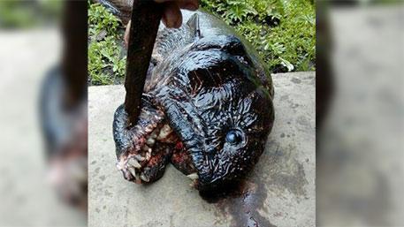 Рыбаки на червя поймали в Каме рыбу-мутанта