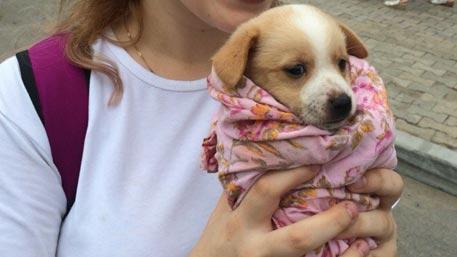 Девушки из Хабаровска забирали животных из приютов для расправы – СМИ