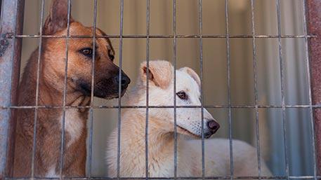 В Анадыре всех бездомных животных уничтожат из-за угрозы бешенства