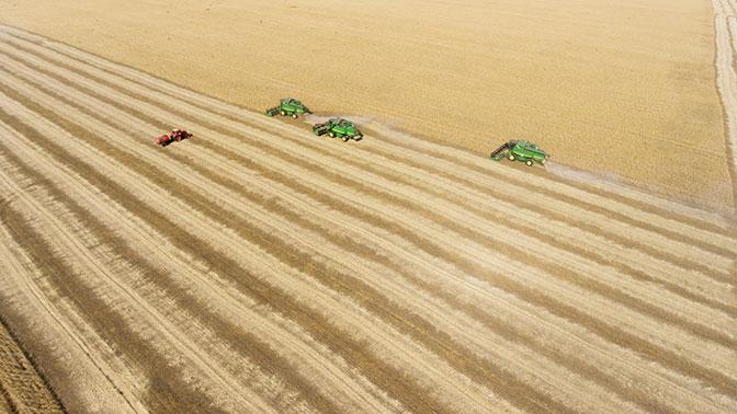 В России ожидается рекордный за всю историю урожай зерна – Путин