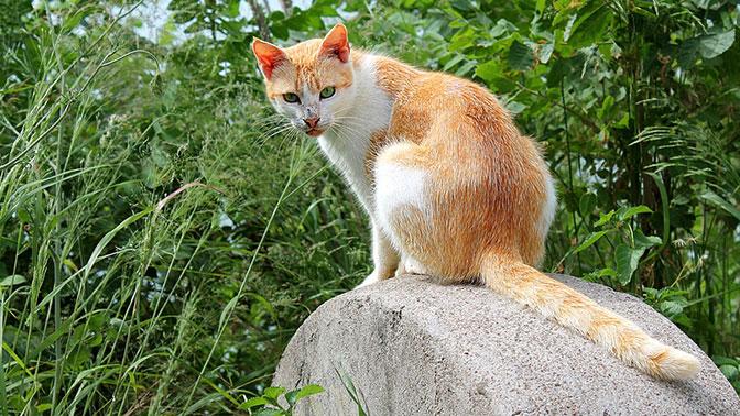 В Ухте полиция ищет живодера, который убил кота в стиральной машине