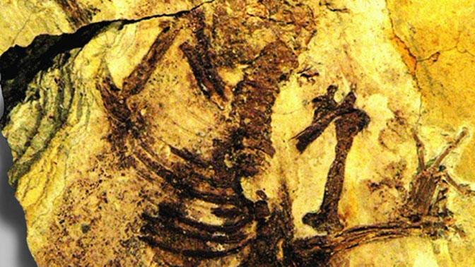 Ученые обнаружили останки древнейших «прямых» предков человека
