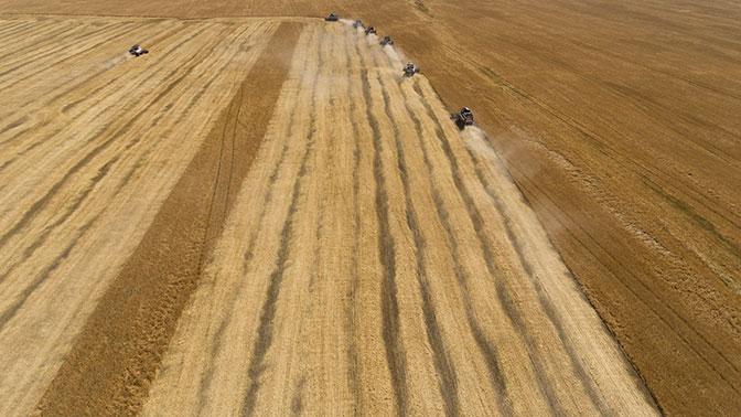 WSJ: урожай пшеницы в России угрожает фермерам в США