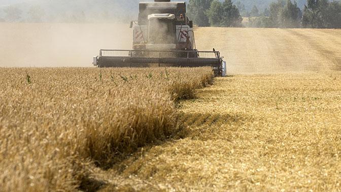 Хлебное могущество «раздавленной» Москвы: почему США проиграли России «пшеничную войну»
