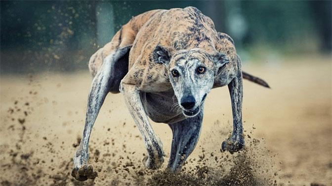 Как вужасах: ВПодмосковье собаки отгрызли голову пенсионерке