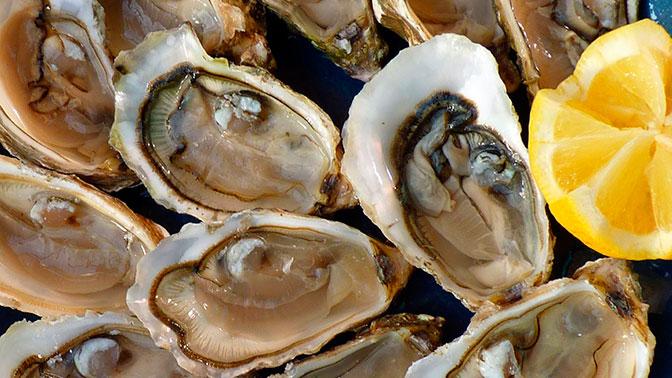 Моллюски иморская капуста значительно подешевеют в будущем году