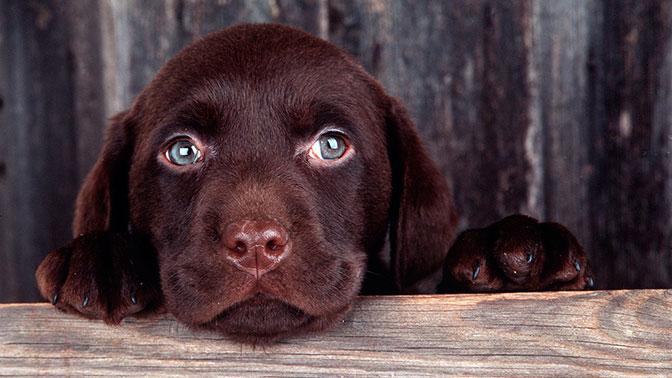Власти Крыма подарили щенка девочке, мать  которой написала письмо Путину