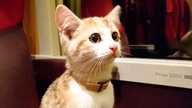 Потерявшийся котенок Фундук сам вернулся домой на поезде