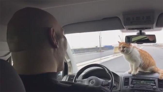 Валуев с котом проехали по Крымскому мосту