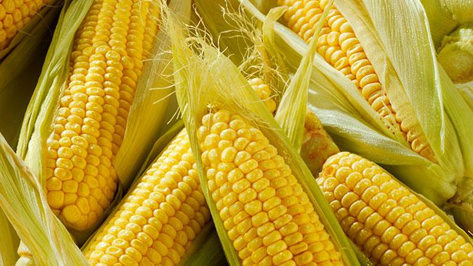 На рынке кукурузы США столкнулись с Аргентиной и Бразилией