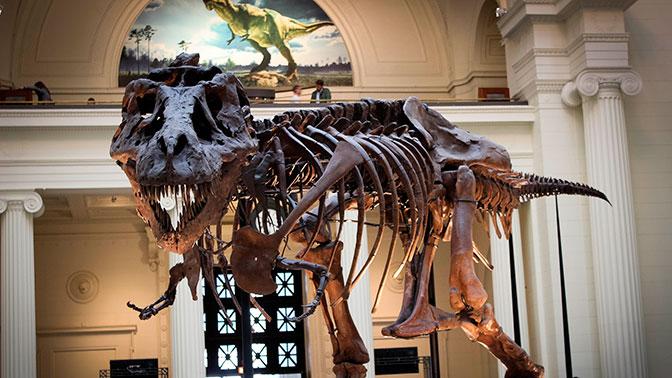Цветы смерти: ученые установили новую причину гибели динозавров