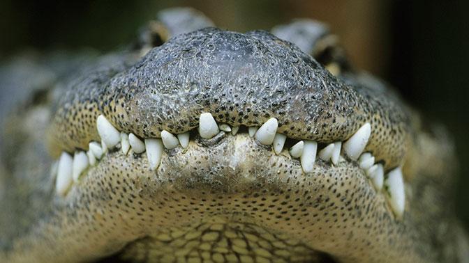 Разъяренная толпа устроила «суд Линча» и бросила насильника в клетку с крокодилами
