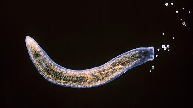 Биологи нашли клетку, которая сможет восстановить любой орган