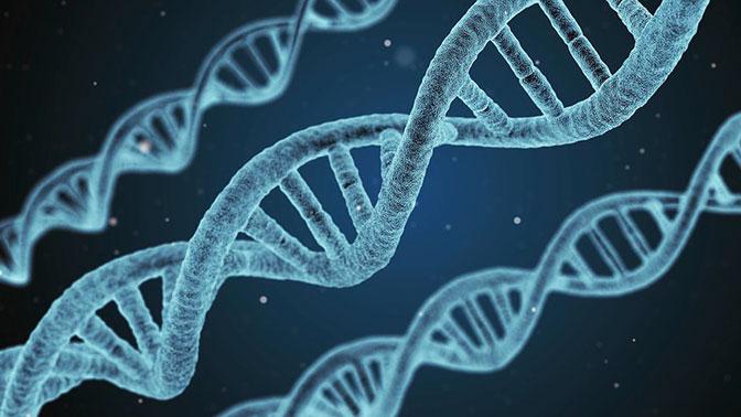 Новый метод редактирования генома оказался смертельно опасным