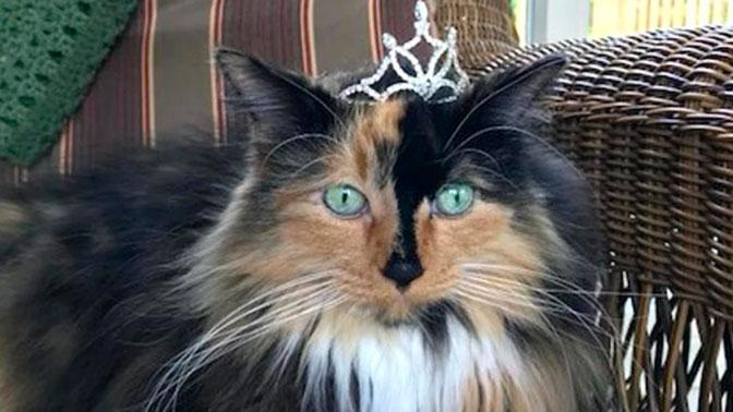 Кот по кличке Сладкий Пирожок стал мэром города