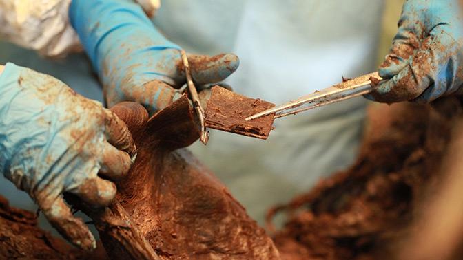 В России обнаружили уникальный скелет мамонта с шерстью