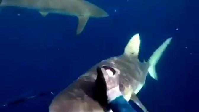 Рыбак голыми руками отбился от акул и снял это на видео
