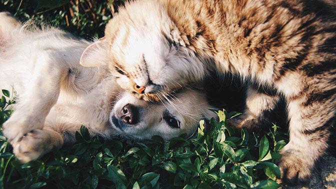 В США одобрили закон, запрещающий есть мясо собак и кошек - СМИ