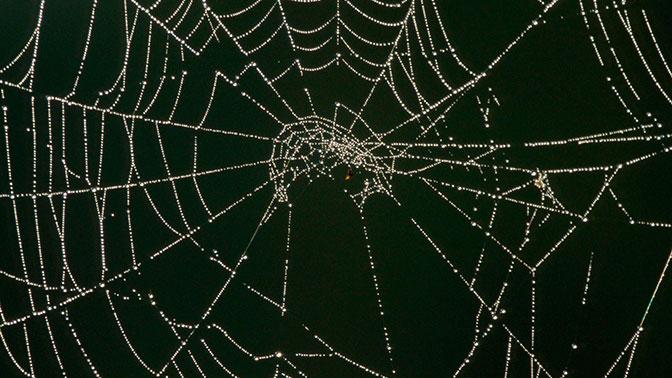Виноваты пауки: жители Ипсвича год страдали от жуткого детского пения по ночам