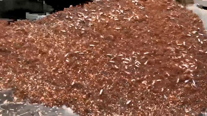 Из-за урагана «Флоренс» в США образовались острова ядовитых муравьев