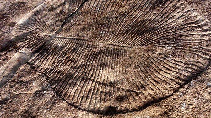 Стал известен возраст старейшего животного на Земле