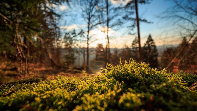 «Дыхание» леса: природное явление в Канаде напомнило сюжет фильма ужасов