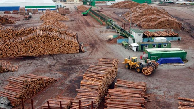 Минприроды готово запретить экспорт древесины из России