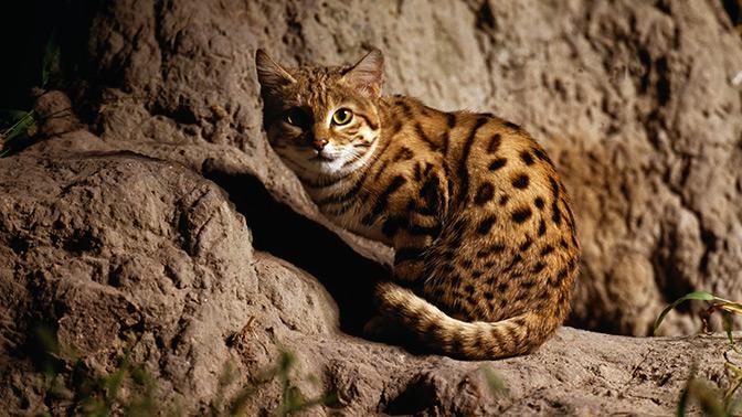 Пушистый убийца: ученые назвали самое смертоносное животное