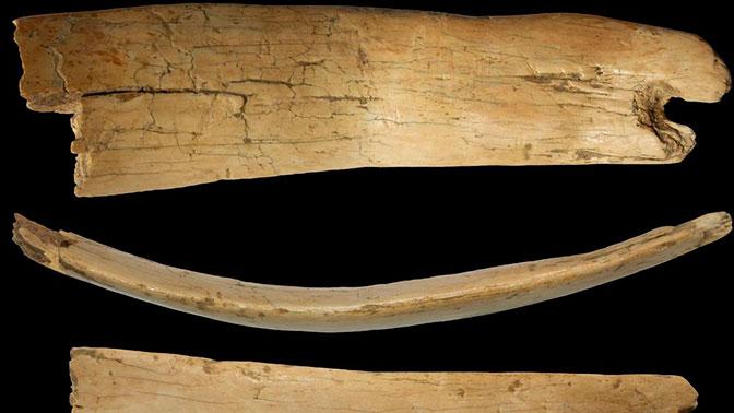 На Алтае обнаружили уникальную древнюю диадему из бивня мамонта