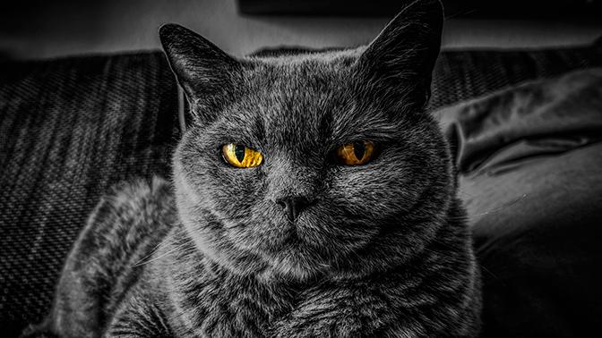 Ученые нашли связь между кошками и психическими расстройствами их хозяев