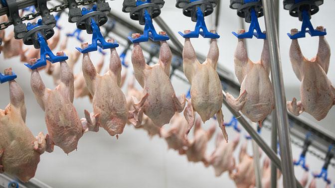 Россия сняла ограничения на ввоз мяса птицы из 15 стран ЕС