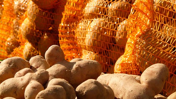 Картофельного вора нашли по отпечатку номера авто на сугробе в Сыктывкаре