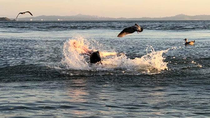 Битва разъяренного морского льва и акулы попала на видео