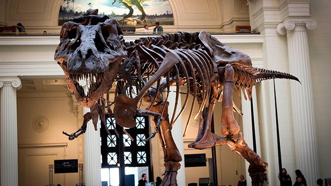 Ученые рассказали о самом крупном тираннозавре в мире