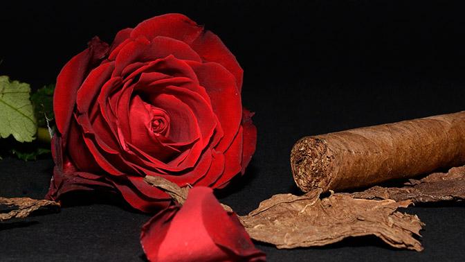 Дым и пепел табачных войн