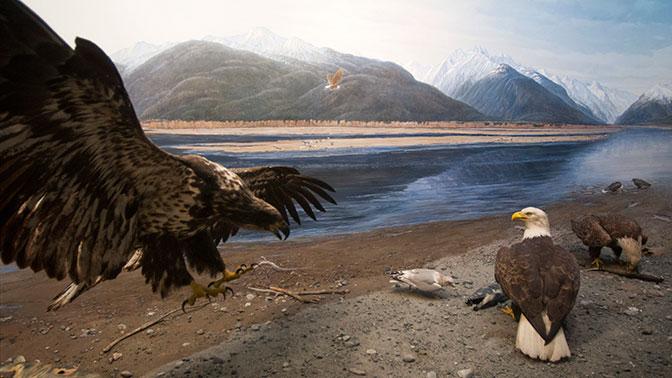 Аляска. Тайны сделки века