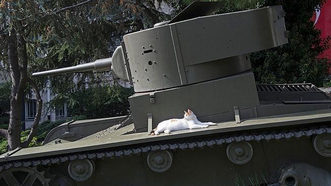 Т-26: основа бронетанковых сил Турции