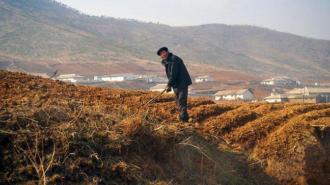 В КНДР 40% населения могут оказаться на грани голодной смерти