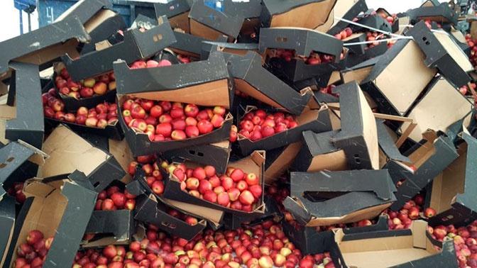 Роспотребнадзор предложил запретить утилизацию пригодных к потреблению продуктов