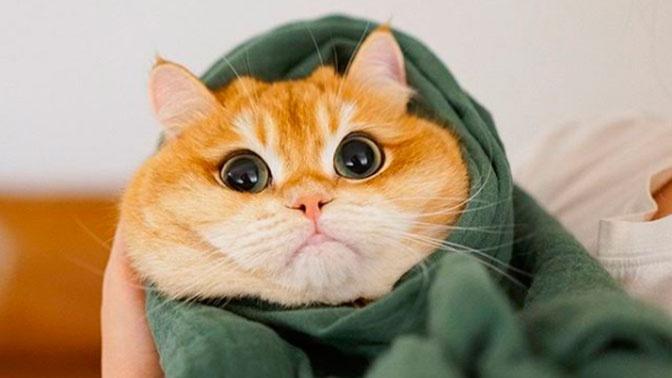 Испуганный «кот-буррито» покорил Сеть