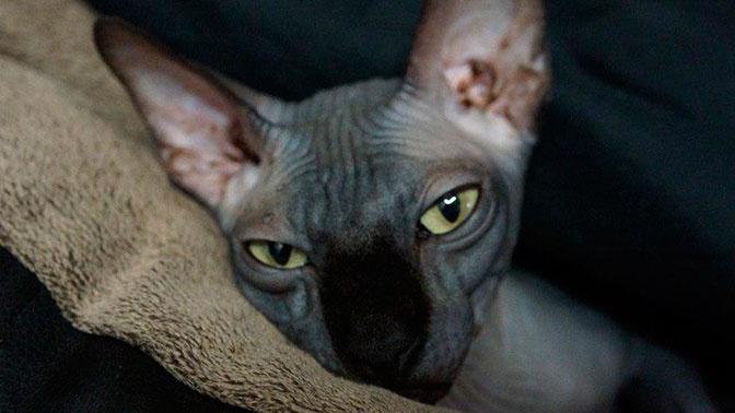Мошенник обманул близких Алибасова на 800 тысяч рублей, вернув не того кота