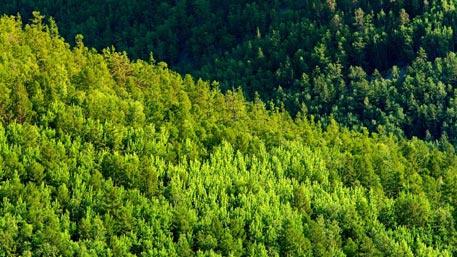 Черепа на деревьях: жуткая находка в лесу испугала жителей Челябинска