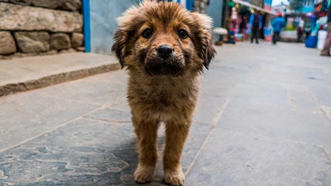 Бровки домиком: ученые раскрыли секрет щенячьего взгляда