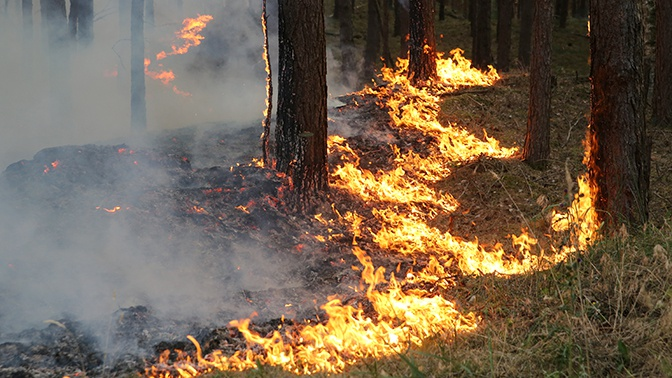 В Иркутской области полыхает пять тысяч гектаров леса