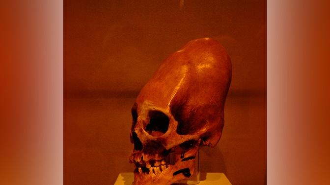 Как у «Чужих»: в Китае нашли древнейшие деформированные черепа